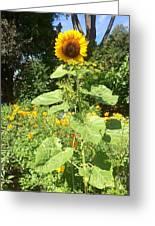 My Own Sun In My Backyard  Greeting Card