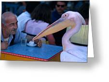 My Pelican Friend Greeting Card