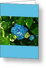 My Pride And Joy Hydrangea Greeting Card