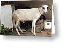My Ram Greeting Card
