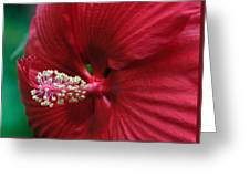 My Red Flower Greeting Card