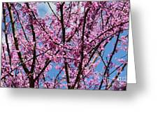 My Redbuds In Bloom Greeting Card