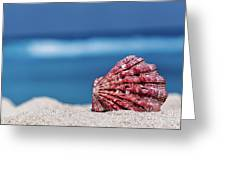 My Shell Greeting Card