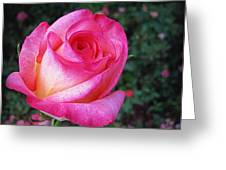 My Special Rose Greeting Card