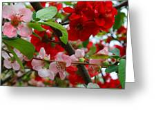 My Two Quince Worth Greeting Card