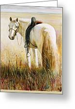 My White Horse  Greeting Card