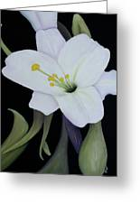 My White Lily Greeting Card