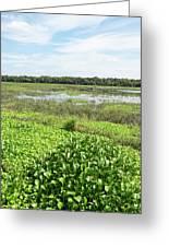 Myakka River And Marshes Greeting Card