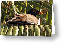 Myna In The Palms Greeting Card