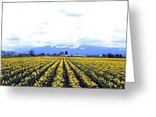 Myriads Of Daffodils Greeting Card