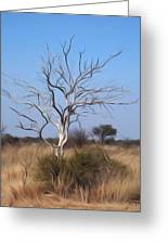 Mystic Buishveld Tree Greeting Card