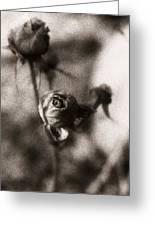 Mystic Rose Greeting Card