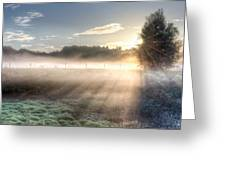 Mystical Fogs Of Florida Greeting Card