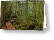 Mystical Willobrae Rainforest Greeting Card