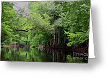 Mystical Withlacoochee River Greeting Card
