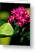 Mystical World 3 Greeting Card