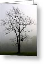 Mysty Tree 3 Greeting Card