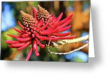 Naked Coral Tree Flower Greeting Card