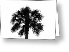 Naked Palm Greeting Card
