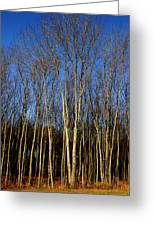 Naked Trees Greeting Card