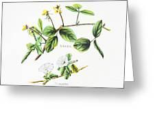 Nanea And Hunakai Greeting Card