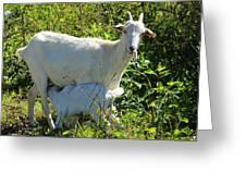 Nanny And Kid Goat Greeting Card