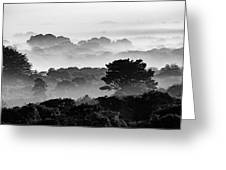 Nantucket Middle Moors In Fog Greeting Card