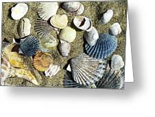 Nantucket Shells Greeting Card