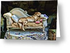 Nap Time Greeting Card by Edward Sobuta
