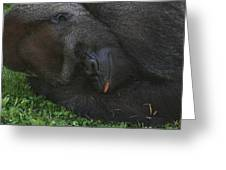 Nap Time For The Monkey Greeting Card