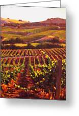 Napa Carneros Summer Evening Light Greeting Card