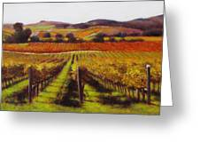 Napa Carneros Vineyard Autumn Color Greeting Card