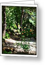 Napa Rose Pathway Greeting Card