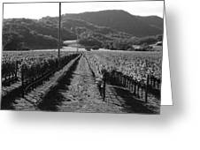 Napa Valley Vineyard .  Black And White . 7d9020 Greeting Card by Wingsdomain Art and Photography