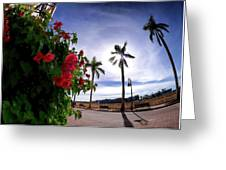 Naples Florida Xii Greeting Card