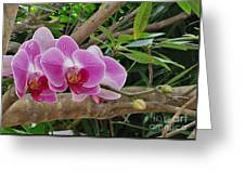 Naples Orchid 1 Greeting Card