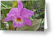 Naples Orchid 3 Greeting Card