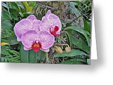 Naples Orchid 4 Greeting Card