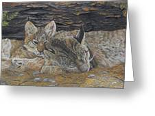 Naptime - Canadian Lynx Greeting Card