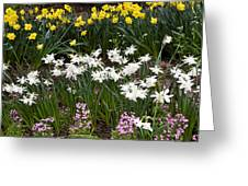 Narcissus And Daffodils In A Spring Flowerbed Greeting Card
