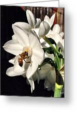 Narcissus And The Bee 1 Greeting Card