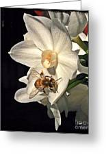 Narcissus And The Bee 2 Greeting Card by Daniele Smith
