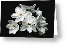 Narcissus The Breath Of Spring Greeting Card