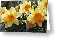 Narcissus Fortissimo Greeting Card