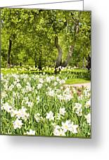 Narcissus In Apple Garden Greeting Card