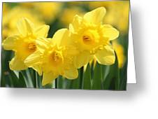 Narcissus Meadows Greeting Card