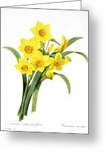 Narcissus (n. Tazetta) Greeting Card