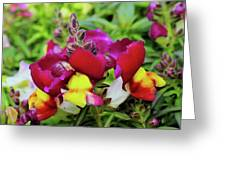 Nascent Blossoms  Greeting Card