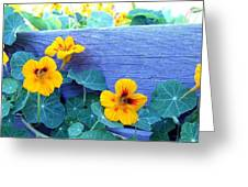Nasturtium Box Greeting Card