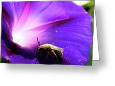 Native Bee On A Purple Flower Greeting Card